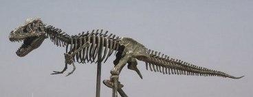 Xương khủng long với xương sống là tuyến chính, xương sườn, xương chân là nhánh phụ.