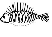Xương cá phản ánh đúng hình dạng bên ngoài