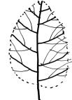 Xương cành cây